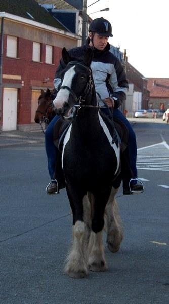st hubert chevaux DSC_0346