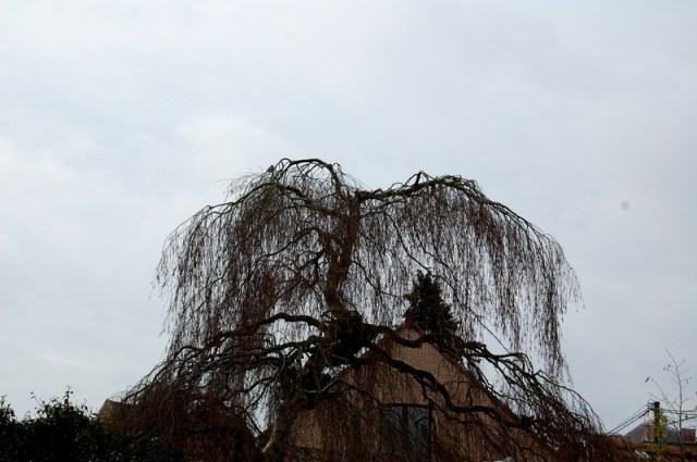 moulin du rié DSC_0716