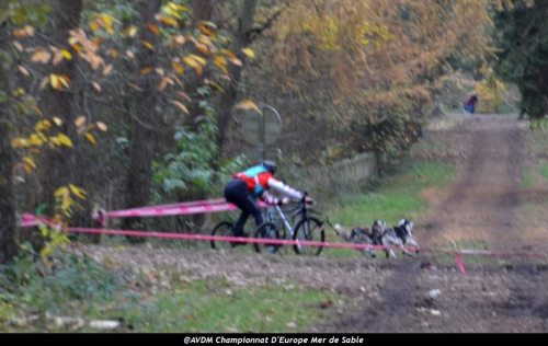 European championship sleddogs Cart FISTC 2013 (36).JPG