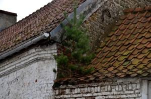 sapin de noël sur un toit.jpg