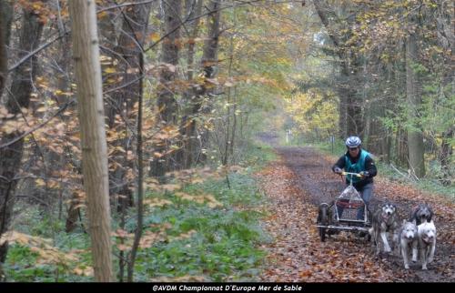 European championship sleddogs Cart FISTC 2013 (30).JPG