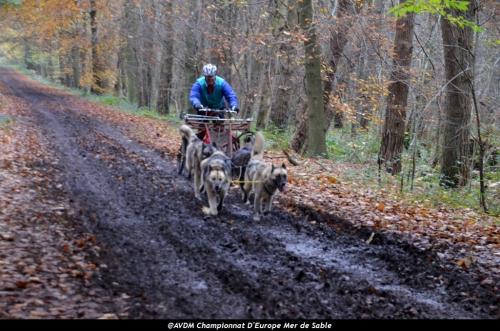 European championship sleddogs Cart FISTC 2013 (34).JPG