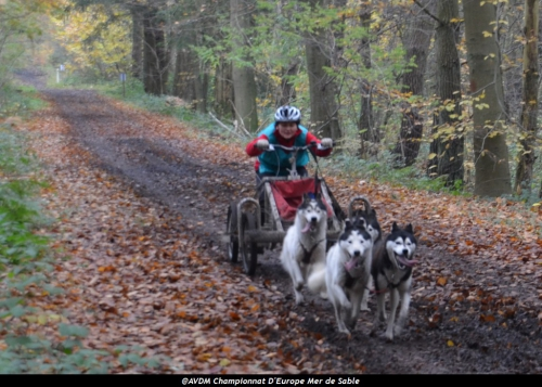 European championship sleddogs Cart FISTC 2013 (25).JPG